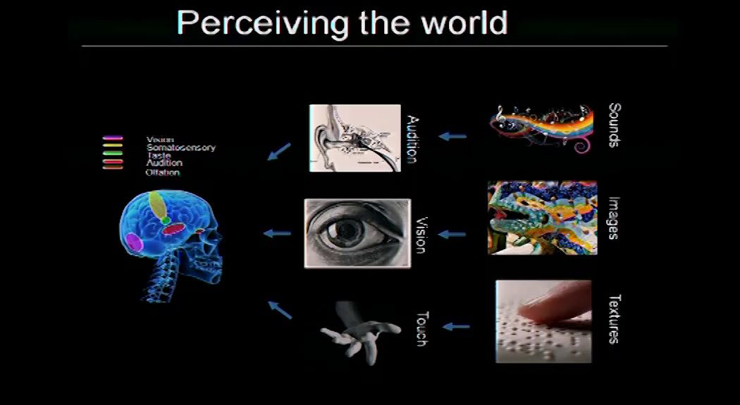 Embracing the world: our brain combines optimally information from the different sensory modalities